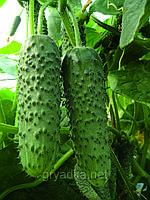 Огурец Амур F1 Бейо 1000 семян, фото 1