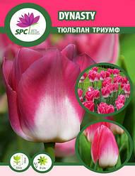 Тюльпан триумф Dynasty