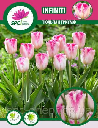 Тюльпан триумф Infiniti, фото 2