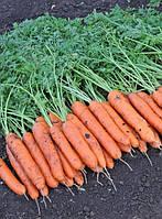 Морковь Дордонь F1 Syngenta 1.4-1.6, 50 000 семян