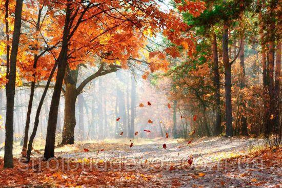 Глянцевые фотообои лес осень   разные текстуры , индивидуальный размер