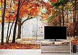 Глянцевые фотообои лес осень   разные текстуры , индивидуальный размер, фото 2