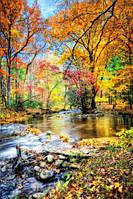 Глянцевые фотообои природа осень разные текстуры , индивидуальный размер