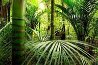 Глянцевые фотообои бамбук разные текстуры , индивидуальный размер