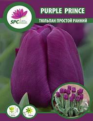 Тюльпан простой ранний Purple Prince