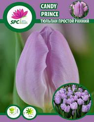 Тюльпан простой ранний Candy Prince