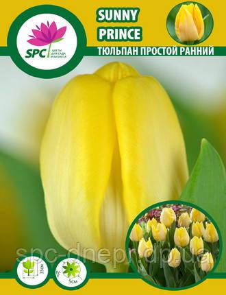 Тюльпан простой ранний Sunny Prince, фото 2