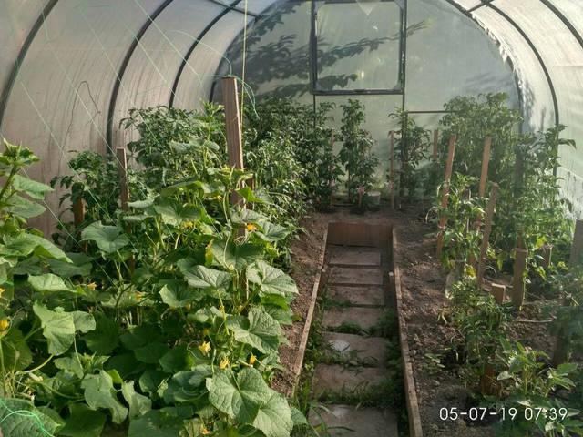 Система поливу АкваДуся подбає про врожай, коли Вас немає поруч!