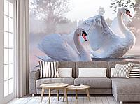 Фотообои для стен лебеди разные текстуры , индивидуальный размер