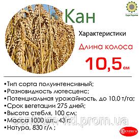 Озимая пшеница КАН