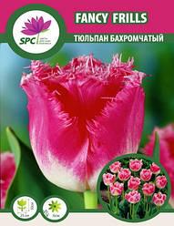 Тюльпан Fancy Frills