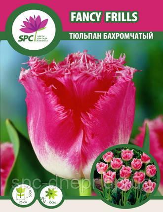 Тюльпан Fancy Frills, фото 2