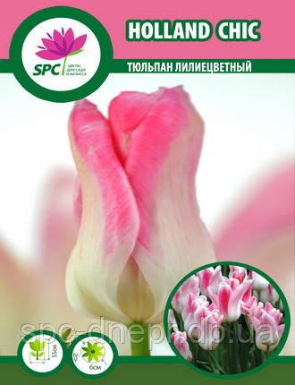 Тюльпан Holland Chic