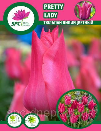 Тюльпан Pretty Lady