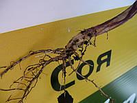 Удобрение натуральное жидкое для БОБОВЫХ Микро-МИНЕРАЛИС (бобовые) 10 л, фото 1
