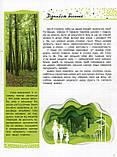 Життя лісу. Світ і його таємниці. Стороженко Галина, фото 5