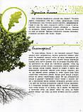 Життя лісу. Світ і його таємниці. Стороженко Галина, фото 7