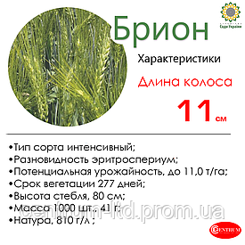 Озимая пшеница БРИОН