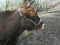 Намордник для корови бичка телиці