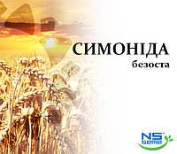 Семена озимой пшеницы Симонида (1 репродукция)