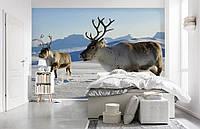 """Флизелиновые Фотообои """"Северные олени"""" от производителя за 1 день. Любая картинка и размер. ЭКО-обои"""