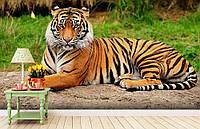 """Флизелиновые Фотообои """"Тигр"""" от производителя за 1 день. Любая картинка и размер. ЭКО-обои"""