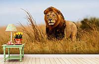 """Флизелиновые Фотообои """"Лев"""" от производителя за 1 день. Любая картинка и размер. ЭКО-обои"""