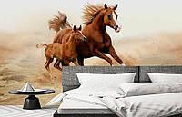 """Флизелиновые Фотообои """"Лошадь и жеребенок"""" от производителя за 1 день. Любая картинка и размер. ЭКО-обои"""
