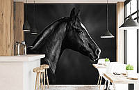 """Флизелиновые Фотообои """"Вороная лошадь"""" от производителя за 1 день. Любая картинка и размер. ЭКО-обои"""