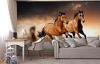 """Флизелиновые Фотообои """"Лошади"""" от производителя за 1 день. Любая картинка и размер. ЭКО-обои"""