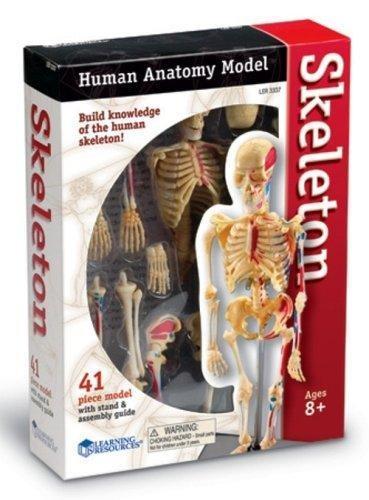 """Демонстрационная модель """"Анатомия человека. Скелет"""" Learning Resources"""