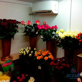 Холодильная камера демонстрации цветочной продукции в городе Днепр 1