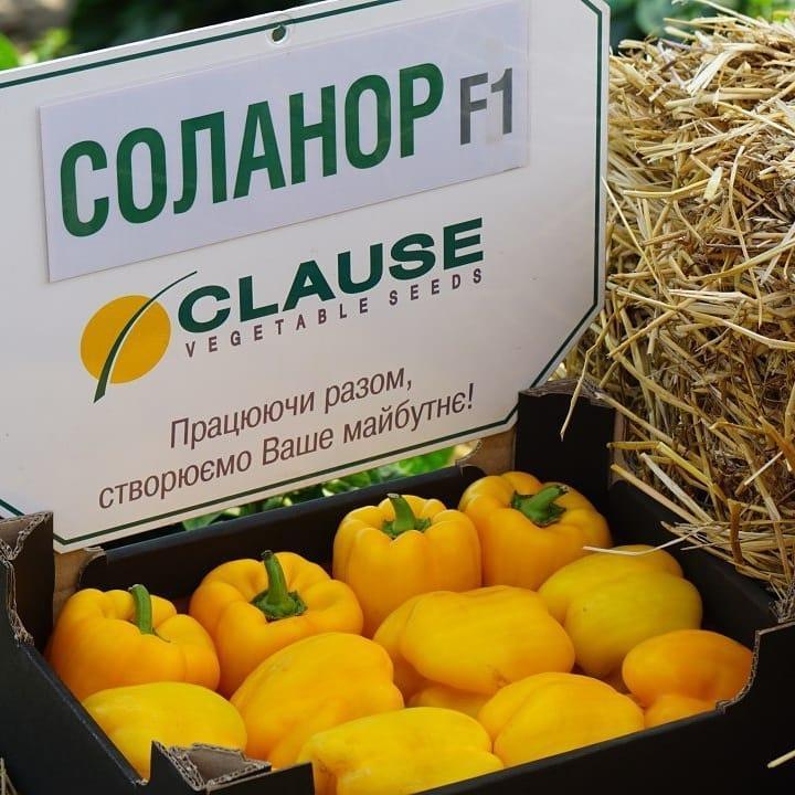 Семена перца сладкого Соланор F1 (1000 сем.) Clause