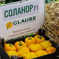Семена перца сладкого Соланор F1 (1000 сем.), фото 1