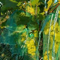 Время позаботиться об урожае винограда!