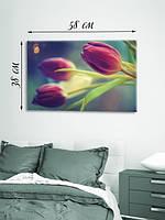 Фотографическая картина «Изящные тюльпаны»