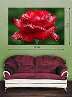 Фотографическая картина «Роза в росе»