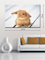 Фотографическая картина «Рыжий кролик»