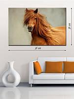Фотографическая картина «Рыжий конь»