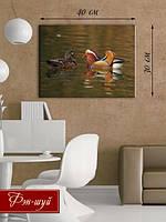 «Утки-мандаринки на природе»