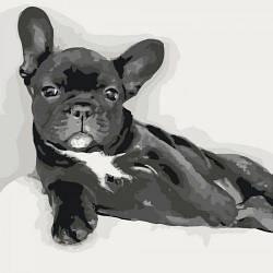 """Картина по номерам """"Сладкий малыш"""" (собака, животное)"""