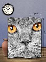 «Кошачьи глаза»