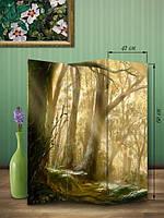«Волшебный лес»