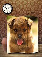 «Лохматый щенок»