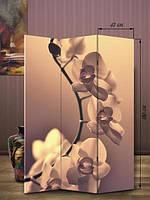 Ширма 180х126  «Орхидея»