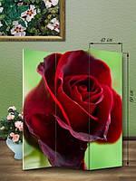 Ширма 150х126 «Роза»