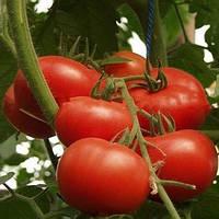 Малика F1 поштучно семена томата высокорослого Семко Юниор