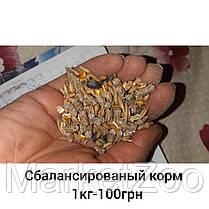 Стартовый пакет для содержания шиншилл M, фото 2