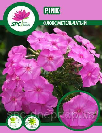 Флокс метельчатый Pink