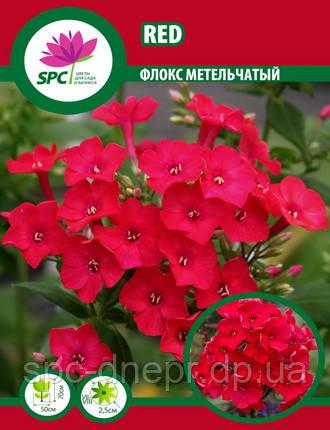 Флокс метельчатый Red, фото 2